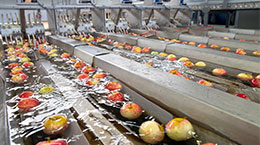 Food Processing Apples in Water on Belt