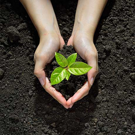 hands in dirt holding green plant