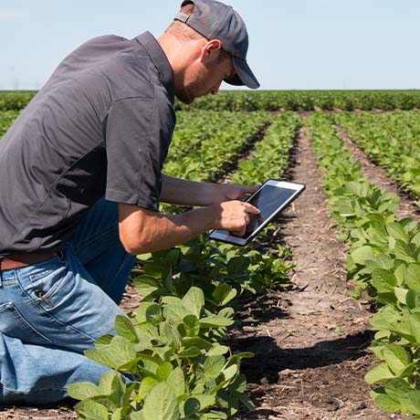 Man checking crops with iPad